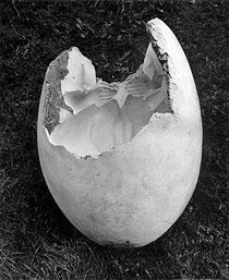 5.11.2010 - 6.2.2011 | EVA KMENTOVÁ (1928–1980) | Spuren in der Landschaft | Skulpturen, Objekte, Zeichnungen